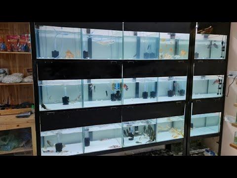 Xotic Aquatics Aquarium Fish Shop