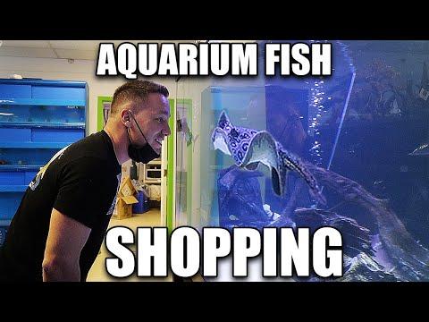 Let's shop for aquarium fish!!
