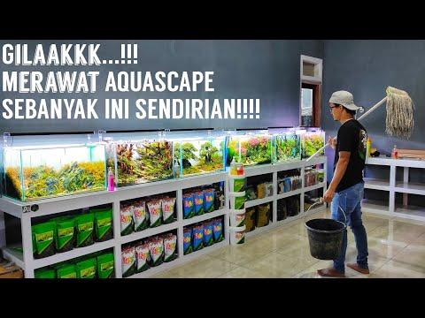 #209 Sehari Maintenance 9 tank Aquascape