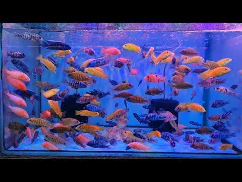 Aqua Planet Aquarium Fish Shop