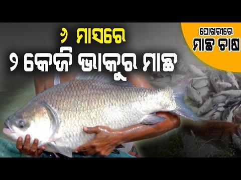 ପୋଖରୀରେ ମାଛ ଚାଷ କେମିତି ଆରମ୍ଭ କରିବେ ( How to start pond fish culture in Odisha ).
