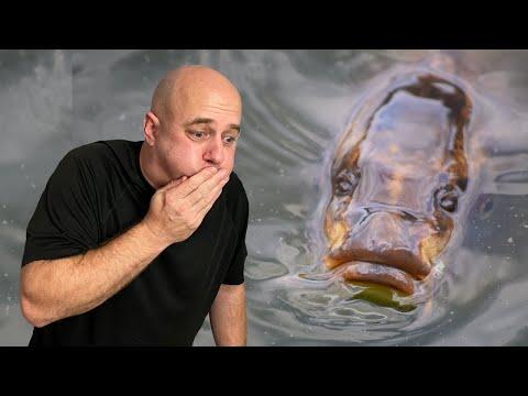 Are These The Ugliest Aquarium Fish?