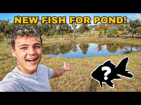 STOCKING My NEW BACKYARD POND with FISH!!