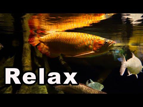Top 10 MOST Relaxing Aquarium Fish!