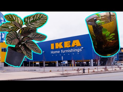 Ikea Haul – Look What They NOW Have for Terrariums and Water Gardens!🌳 💦 🌿