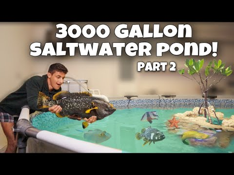 MOVING ALL My EXOTIC FISH Into NEW POOL POND + Adding Rocks!! (Part 2)