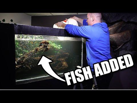 FISH ADDED TO DIY AQUARIUM! 7 Oscar fish!!!