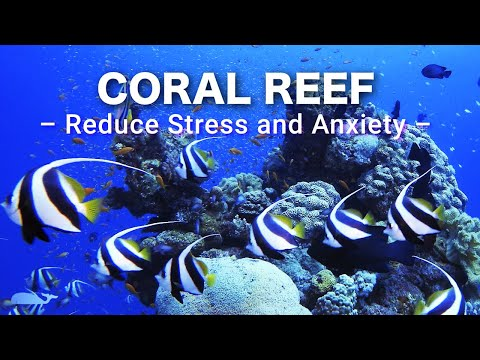 LIVE CORAL REEF AQUARIUM  WITH Relaxing Music for Sleep, Study, Yoga & Meditation 🔴24/7