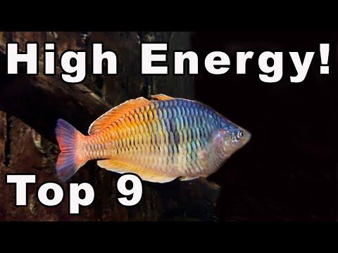 These 9 Aquarium Fish are CRAZY Active!