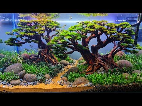 #240 Bonsai Aquascape beringin kembar