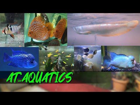AT AQUATICS  | Fish Prices | Aquarium Fish New Stock
