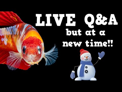 NEW TIME! Live Aquarium Questions and Hopefully Answers!