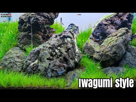 #246 Iwagumi aquascape style with local Indonesian stones