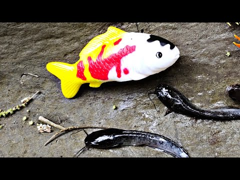 Adventure, Koi Fish, Catfish And Marine Animal Toys, Dolphins, Sharks, Whales, Crabs, Part118