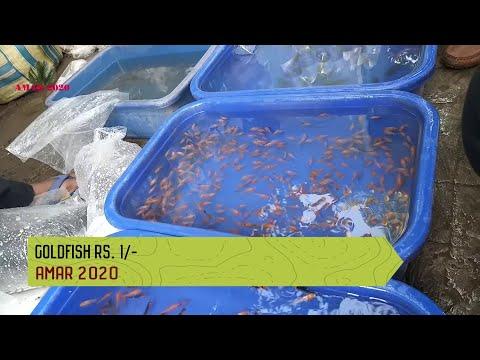 GALIFF STREET CHEAPEST AQUARIUM FISH MARKET KOLKATA INDIA | 7TH MARCH 2021 VISIT PART 3