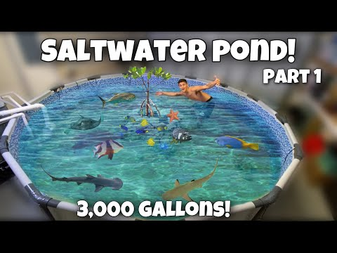 FINALLY BUILDING My DREAM SALTWATER POND + Moving Fish!! (Part 1)
