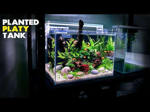 Aquascape Tutorial: Planted Platy Aquarium (How To: Step by Step Fish Tank Guide)