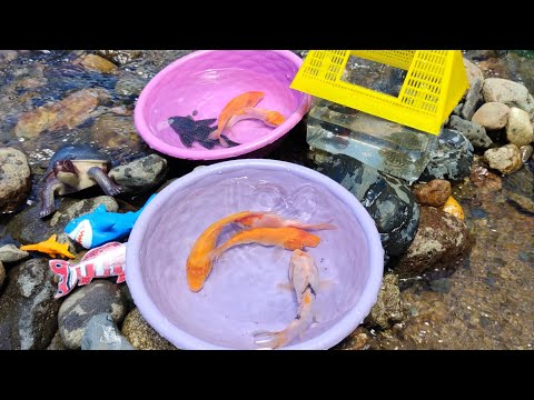 Looking for Koi Fish, Chefs, Real Turtles, Geckos, Marine Toys, Sharks, Whales. Section162