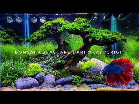 """#248 Bonsai Aquascape sederhana """"simpel dan mudah dirawat"""""""