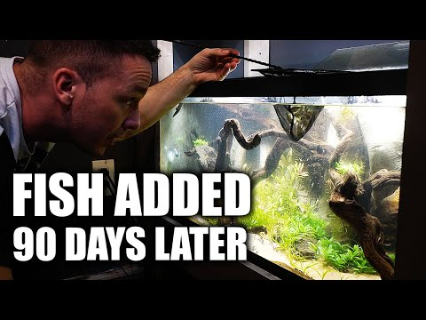Fish added to new aquarium (90 DAY REVEAL!) The king of DIY