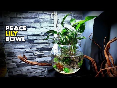 Aquascape Tutorial: Peace Lily Bowl Aquarium (How To: Step By Step Planted Tank Guide)