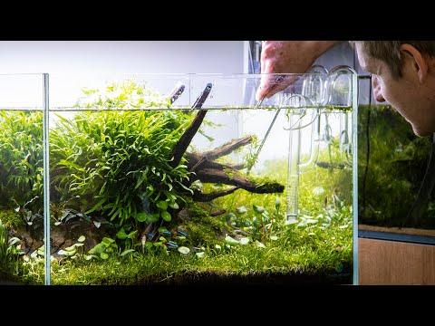 Nature Aquarium Aquascape Maintenance + Chill Beats