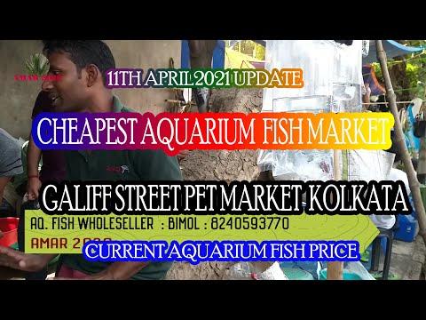 GALIFF STREET CHEAPEST & BIGGEST AQUARIUM FISH MARKET OF KOLKATA INDIA |11TH APRIL 2021 VISIT PART 3