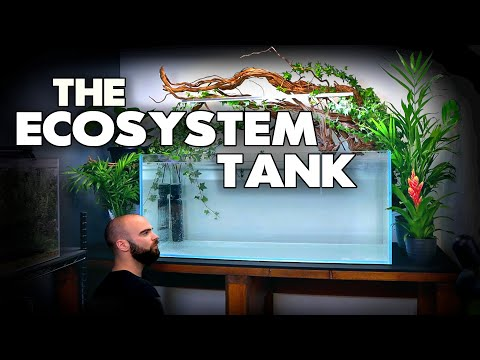 How To: Ecosystem Aquarium NO WATER CHANGES (part 1) | MD Fish Tanks
