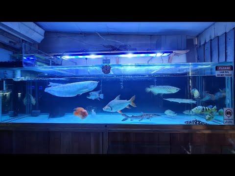 Biggest Fish Tank at Suraj Aquarium Fish Shop