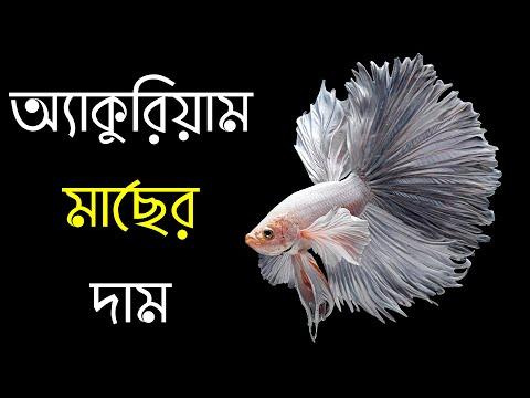 অ্যাকুরিয়াম মাছের দাম 🐠 Aquarium Fish Price in Bangladesh | aquarium fish price | PRANIR GOLPO