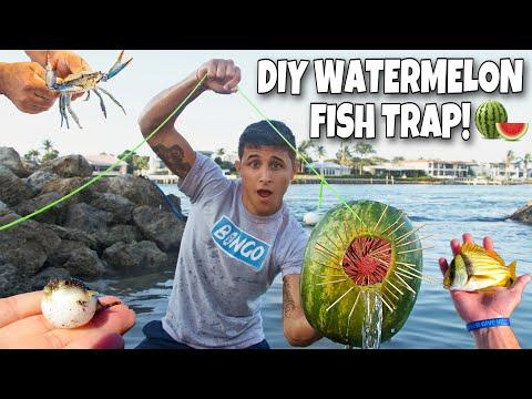 WATERMELON FISH TRAP Catches EXOTIC AQUARIUM FISH!! *Amazing*