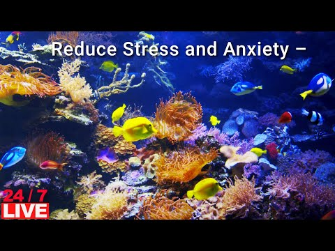 CORAL REEF LIVE with water sound Lower blood pressure | Reduce Stress and Anxiety