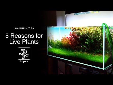 Why Live Aquarium plants: 5 Reasons