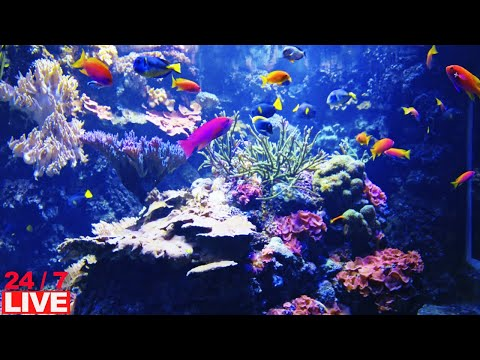 CORAL REEF AQUARIUM WITH RELAX PIANO MUSIC Life 🔴24/7