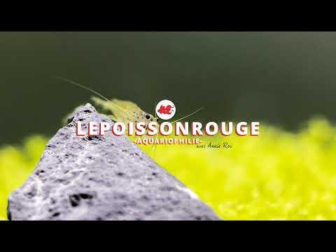 [LIVE] L' aquarium à la maison – avec Sébastien Ruaux