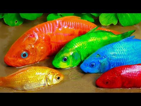 Stop Motion ASMR | Experiment Colorful Koi Fish  great war Crocodile Violet |Primitive Cooking