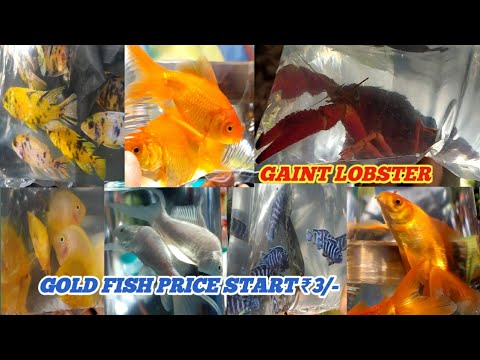 CHEAPEST AQUARIUM FISH MARKET IN INDIA   GALIFF STREET FISH MARKET KOLKATA  VISIT 18 JULY 2021