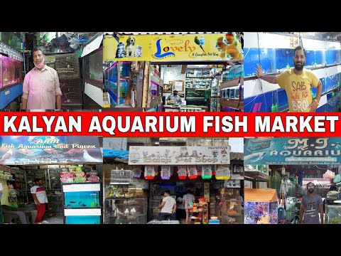 Kalyan Aquarium Fish Market Mumbai