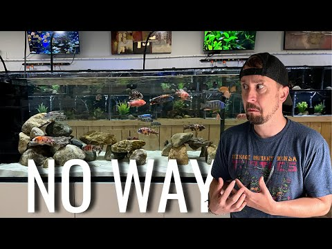 This is The Most Ridiculous Tropical Fish Store   Aquarium Store Tour & Review