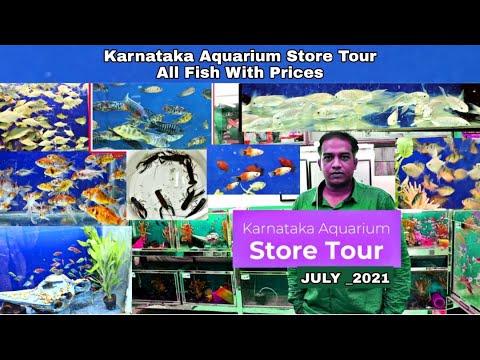Karnataka Aquarium fish Shop tour_ Aquarium Fish with Prices Update