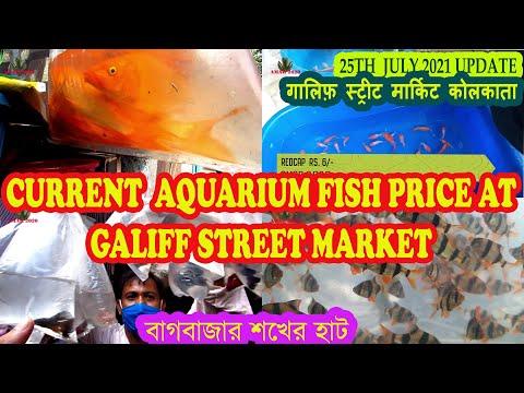 GALIFF STREET AQUARIUM FISH MARKET KOLKATA INDIA | RECENT AQUARIUM FISH PRICE | 25TH JULY 2021 VISIT