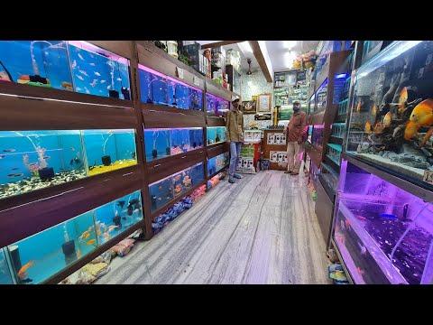 Lovely Aquarium Fish Shop