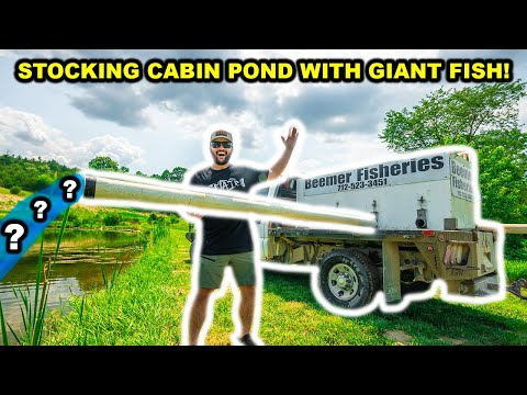 STOCKING TRUCK Delivers GIANT FISH for My BACKYARD CABIN Pond!!!!