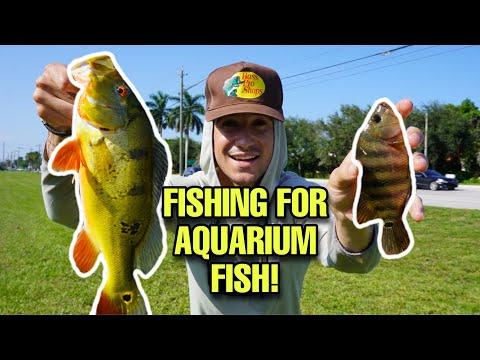 FISHING For AQUARIUM FISH!! *Aquarium Fish CATCH CLEAN COOK*