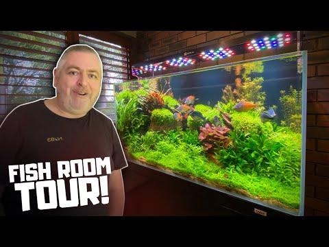 The Most BEAUTIFUL Rainbowfish Aquascape! Fish Room Tour!