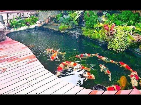 Beautiful Jumbo Koi Villa! Amazing Backyard Garden Koi Pond