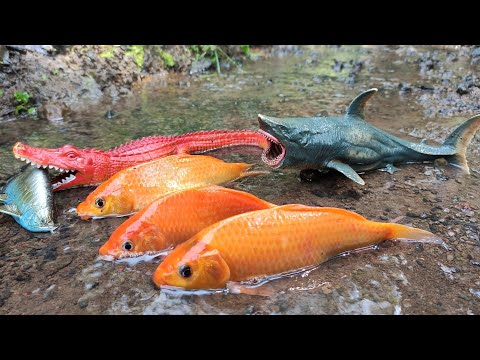 Finding Ornamental Fish, Carp, Koi Fish, Arowana Fish, Whale, Shark, Lobster, Lizard [Part517]