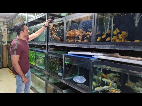 Farhat Fisheries Aquarium Fish Shop