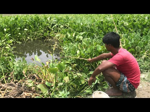 Village Fishing Video   Fishing With Hook   Catching Koi fish & Catfish By Hook in Beautiful Natural