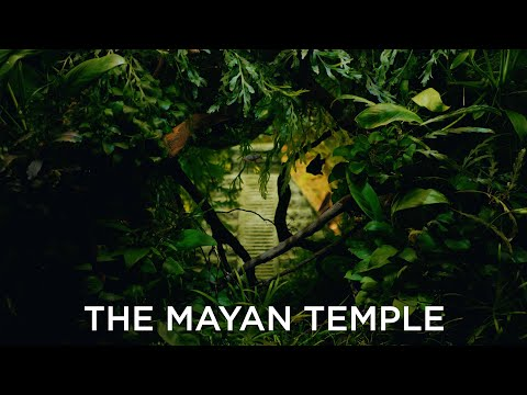 The Mayan Temple – Abandoned temple in a beautiful aquascape